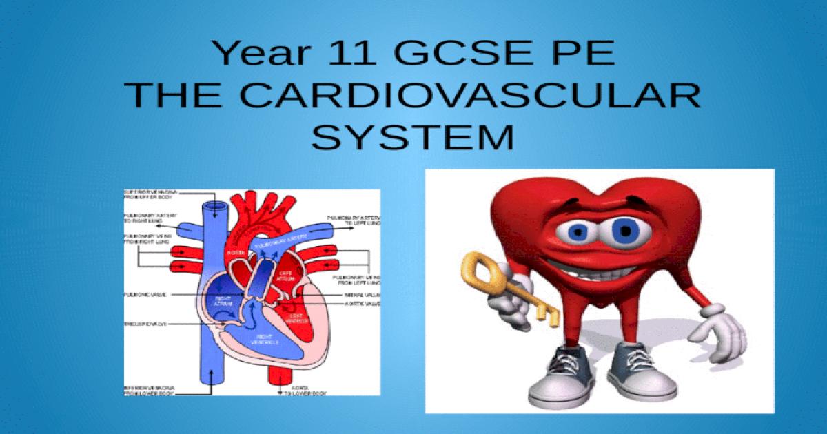 Year 11 GCSE PE THE CARDIOVASCULAR SYSTEM - PPTX Powerpoint
