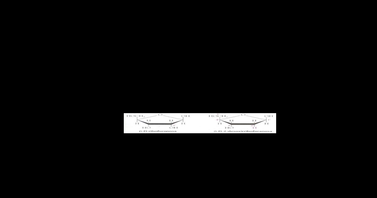 Tema6 Acidnucleicos Doc Document